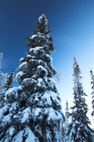 Piel-árboles bajo una nieve Foto de archivo libre de regalías