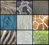 Piel animal, piel y collage de las plumas Fotos de archivo libres de regalías