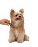 Piel de cepillado del perro Imagen de archivo libre de regalías