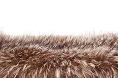 Piel de Fox Imagenes de archivo