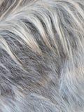 Piel de la cabra Fotos de archivo