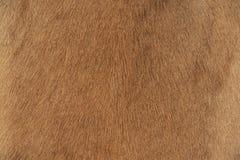 Piel de la cabra. Imagen de archivo