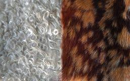 Piel de la cabra del angora contra la piel de la cabra del pelo foto de archivo