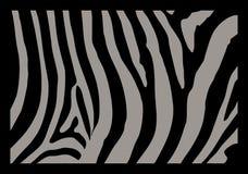 Piel de la cebra Fotografía de archivo libre de regalías