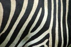 Piel de la cebra Foto de archivo