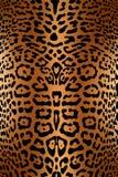 Piel de la impresión del leopardo Fotos de archivo