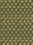 Piel de la piña, inconsútil Foto de archivo libre de regalías