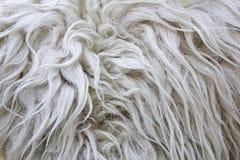 Piel de las lanas Fotografía de archivo