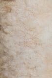 Piel de las ovejas Foto de archivo libre de regalías