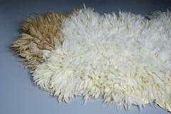Piel de las ovejas de Eid AlAdha en Grey Background fotos de archivo
