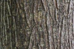 Piel de los árboles Imagen de archivo