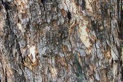 Piel de los árboles Foto de archivo libre de regalías