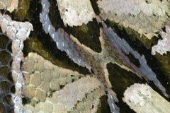 Piel de serpiente Foto de archivo libre de regalías