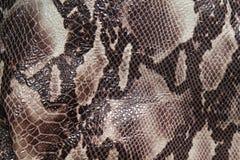 Piel de serpiente Imagenes de archivo