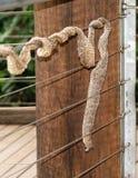 Piel de serpiente en la cerca de alambre imagen de archivo libre de regalías