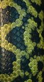 Piel de serpiente - negro y verde fotografía de archivo libre de regalías