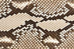 Piel de serpiente imagen de archivo libre de regalías
