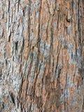 Piel de un árbol de pino Imagenes de archivo