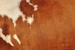 Piel de una vaca Imagenes de archivo