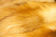 Piel de zorro rojo imagenes de archivo
