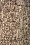 Piel del árbol Foto de archivo libre de regalías