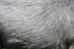 Piel del caballo Imagen de archivo libre de regalías