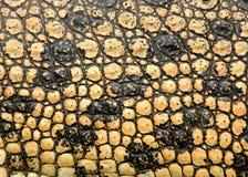 Piel del cocodrilo imagenes de archivo