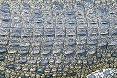 Piel del cocodrilo Foto de archivo libre de regalías