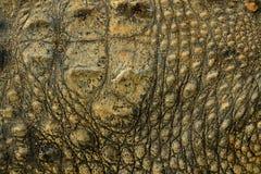Piel del cocodrilo Foto de archivo