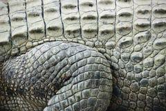 Piel del cocodrilo. Imagen de archivo libre de regalías