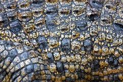 Piel del cocodrilo del agua salada Fotos de archivo