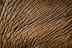 Piel del elefante Imagen de archivo libre de regalías