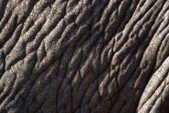 Piel del elefante foto de archivo