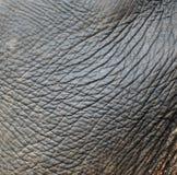 Piel del elefante foto de archivo libre de regalías