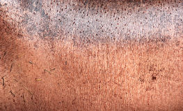 Piel del hipopótamo Foto de archivo