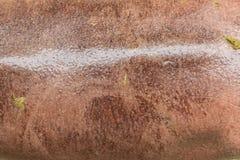 Piel del hipopótamo Fotos de archivo