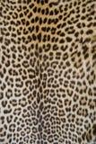 Piel del leopardo fotografía de archivo