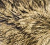 Piel del lobo Fotografía de archivo libre de regalías