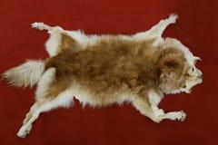 Piel del lobo Fotos de archivo