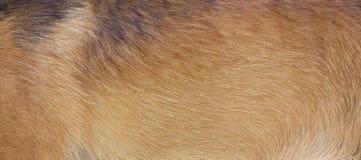 Piel del perro Foto de archivo libre de regalías