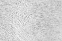 Piel del perro Imagen de archivo libre de regalías