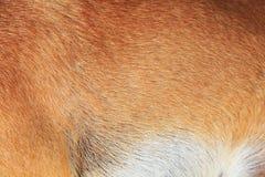 Piel del perro Fotos de archivo libres de regalías