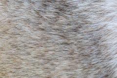 Piel del perro fotografía de archivo