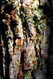Piel del pino fotos de archivo