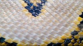 Piel del primer de la serpiente foto de archivo libre de regalías