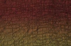Piel del reptil Fotografía de archivo libre de regalías