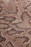 Piel natural de un pitón Imagen de archivo libre de regalías
