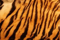 Piel texturizada del tigre Imagen de archivo