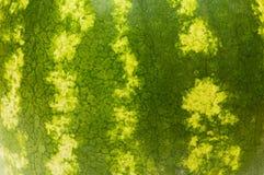 Piel verde de la sandía Imagenes de archivo