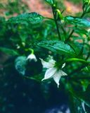 Pieles de la flor debajo de una hoja Foto de archivo